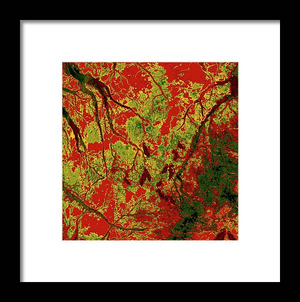 Trees Framed Print featuring the photograph Focus Of Attention 22 by Gary Bartoloni