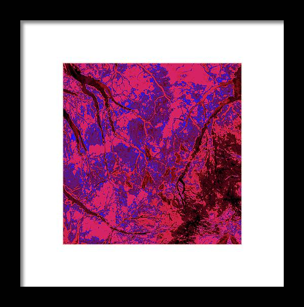 Trees Framed Print featuring the photograph Focus Of Attention 23 by Gary Bartoloni