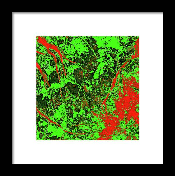 Trees Framed Print featuring the photograph Focus Of Attention 24 by Gary Bartoloni