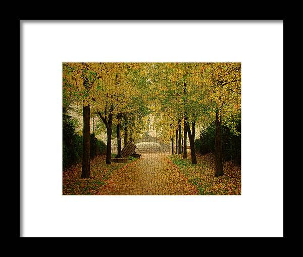 Terry Fox Framed Print featuring the photograph Focusing On Fox by Tingy Wende