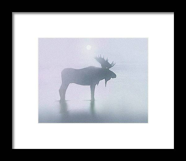 Landscape Framed Print featuring the painting Fog Moose by Robert Foster