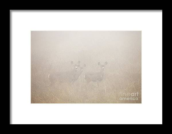 Deer Framed Print featuring the photograph Foggy Eyes by Greg Clure