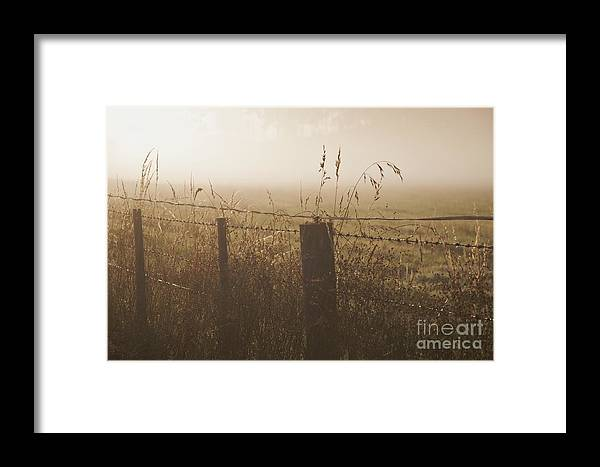 Tasmania Framed Print featuring the photograph Foggy Morning At A Farm by Hideaki Sakurai