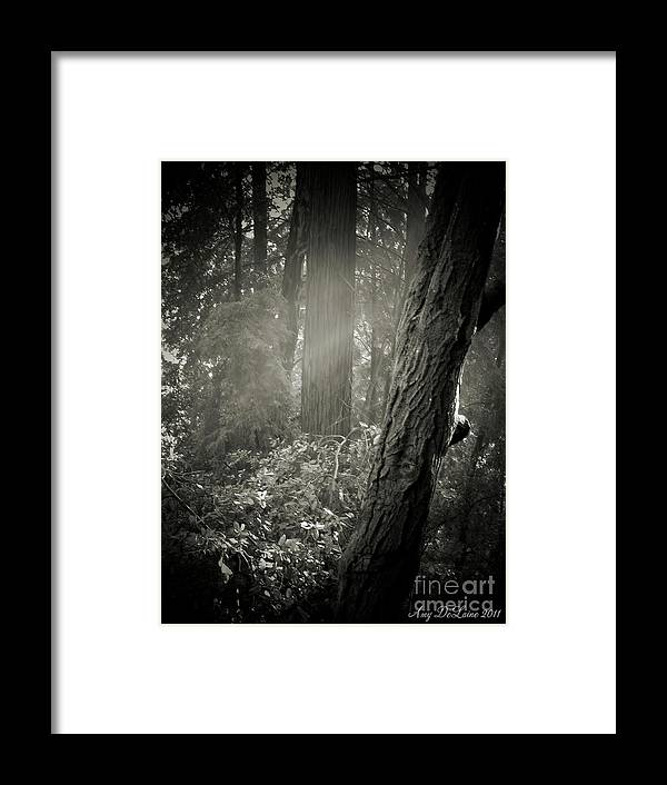 Fog Framed Print featuring the photograph Foggy Morning In The Woods by Amy Delaine