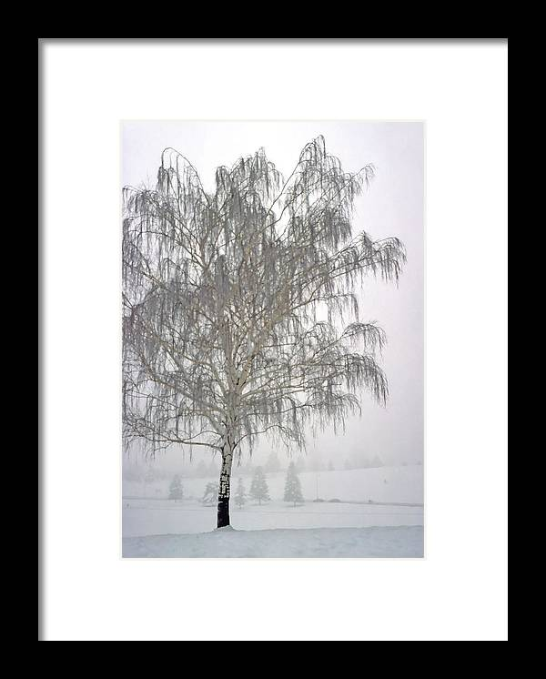 Nature Framed Print featuring the photograph Foggy Morning Landscape 11 by Steve Ohlsen