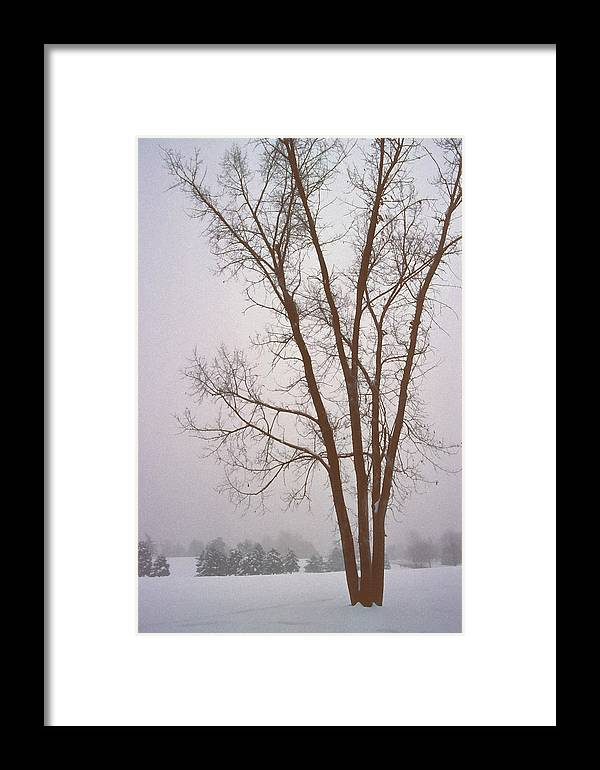Nature Framed Print featuring the photograph Foggy Morning Landscape 13 by Steve Ohlsen