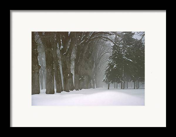 Trees Framed Print featuring the photograph Foggy Morning Landscape 6 by Steve Ohlsen