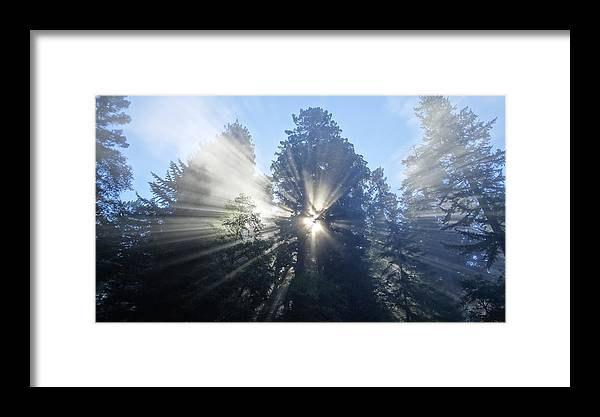 Redwood National Park Sunrise Sunbeams Sunrays Fog Framed Print featuring the photograph Foggy Redwood Sunrise by Matt Johnson