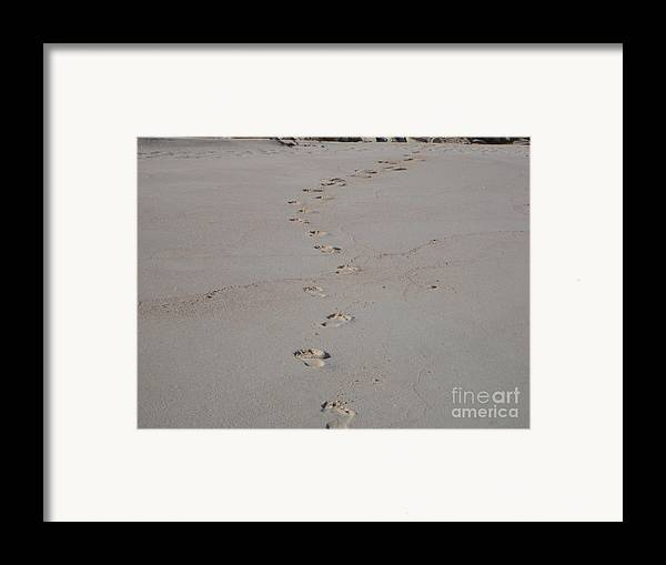 Sand Framed Print featuring the photograph Follow Me by PJ Cloud