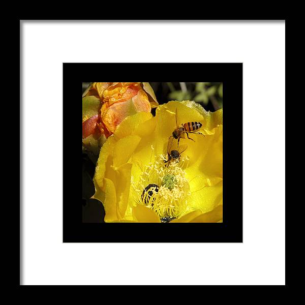Flower Framed Print featuring the photograph Follow The Buzz by Stephen Anderson