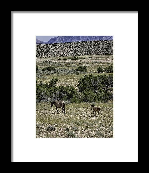 Wild Horse Framed Print featuring the photograph Following Momma by Elizabeth Eldridge