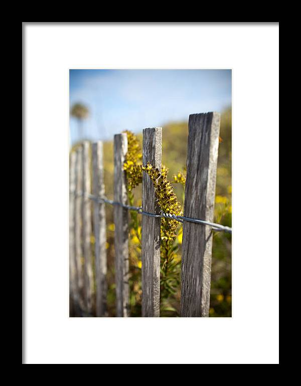 Wildflowers Framed Print featuring the photograph Folly Beach Wild Flowers by Dustin K Ryan