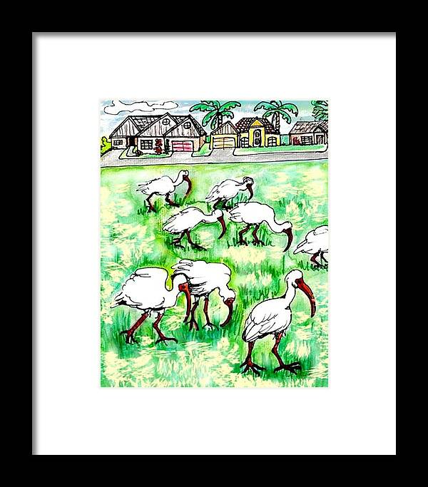Ibis Framed Print featuring the drawing Foraging Ibis by Carol Allen Anfinsen