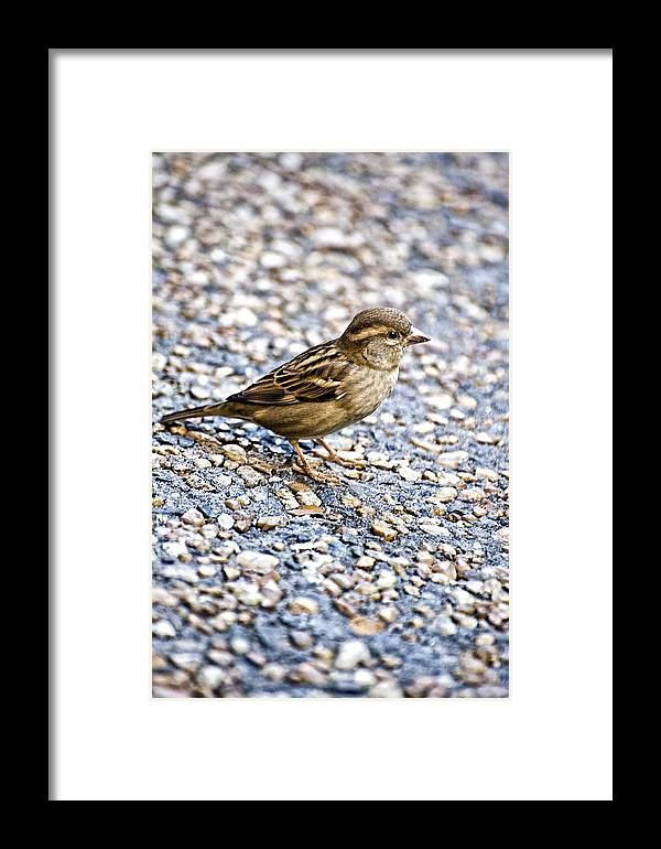 Bird Framed Print featuring the photograph Foraging by Sarita Rampersad