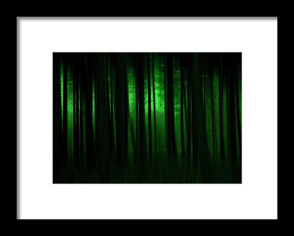 Forest Framed Print featuring the photograph Forest Abstract03 by Svetlana Sewell