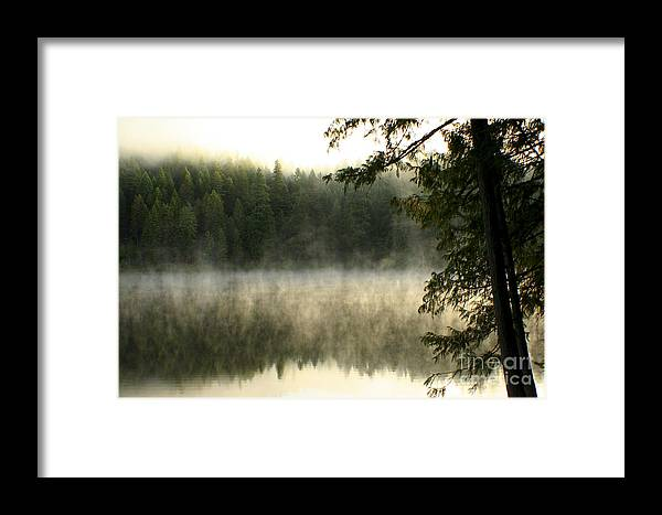 Fog Framed Print featuring the photograph Forest And Fog by Idaho Scenic Images Linda Lantzy
