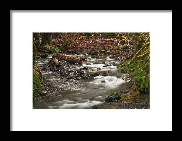 River Framed Print featuring the photograph Forest Creek by Chad Davis