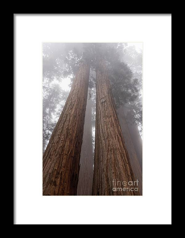 Sequoia National Park Framed Print featuring the photograph Forest Dream by Peggy Hughes