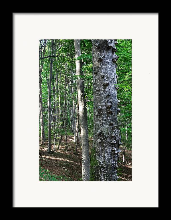 Forest Framed Print featuring the photograph Forest by Elisa Locci