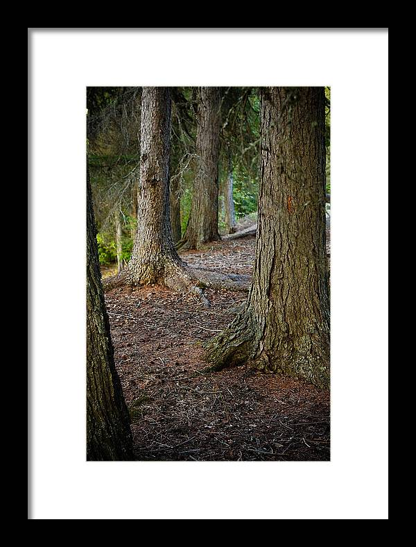 Glacier Framed Print featuring the photograph Forest Feet by Jon Woodbury