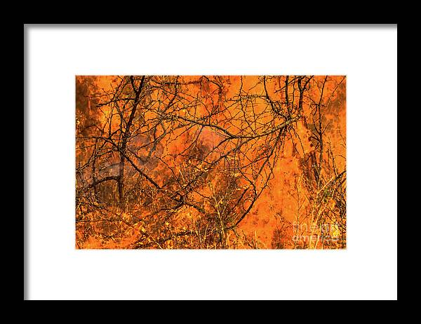 Blaze Framed Print featuring the photograph Forest Fire by Benny Marty