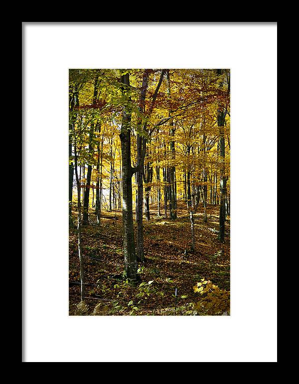 Trees Framed Print featuring the photograph Forest Floor One by Tim Nyberg