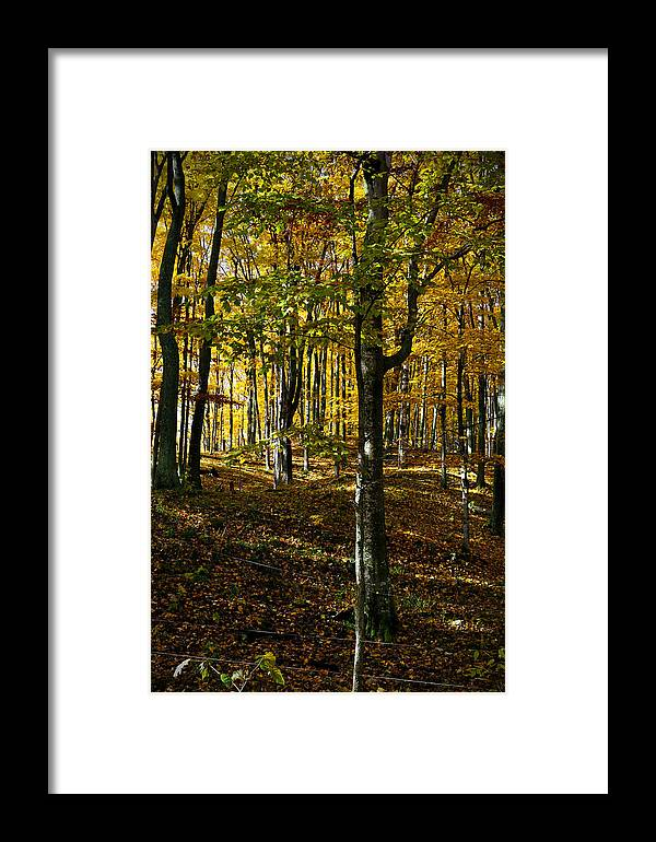 Trees Framed Print featuring the photograph Forest Floor Two by Tim Nyberg