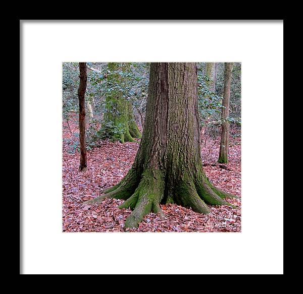 Oldgrowth Forest Floor Images Mature Forest Foundation Images Healthy Forest Profile Chesapeake Bay Watershed Forest Images Mature Woodland Images Big Tree Prints Office Art Wall Art Stock Nature Photography Nature Images Natural Art Natural Images Woodland Profile Mossy Trees Mossy Roots Forest Foundation Forest Buffer Wildlife Habitat Protect Oldgrowth Forest Save Life Home Decoration Affordable Art Discount Prints Quality Nature Prints Oldgrowth Forest Photographs Mature Tree Photographs Oldgrowth Tree Photographs Mature Woodland Photographs Framed Print featuring the photograph Forest Foundation by Joshua Bales