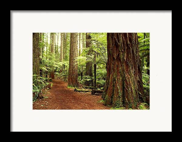 Hiking Trail Framed Print featuring the photograph Forest by Les Cunliffe