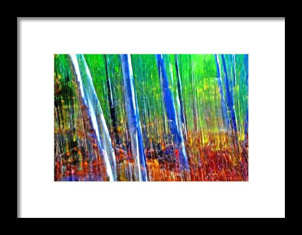 Forest Framed Print featuring the photograph Forest Magic by Bill Morgenstern