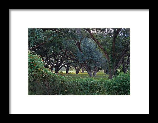 Flowers Framed Print featuring the photograph Forest Of Green Bw by Michael Thomas