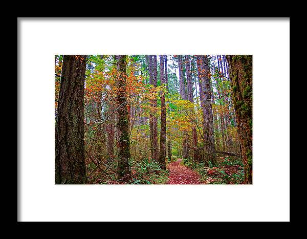 Nature Framed Print featuring the photograph Forest Road by Mark Lemon