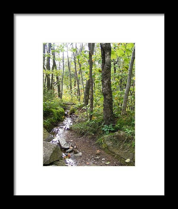 Forest Framed Print featuring the photograph Forest Stream by Alison Heckard