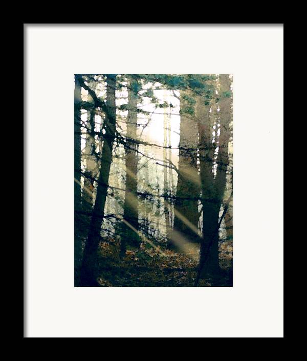 Forest Framed Print featuring the painting Forest Sunrise by Paul Sachtleben