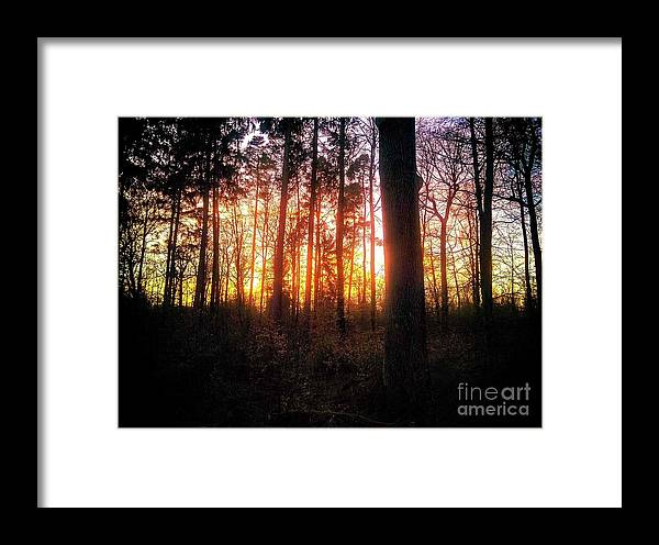 Forest Framed Print featuring the photograph Forest Sunset by Ad Salaheddine