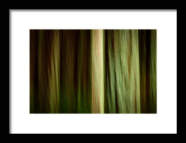 Bridle Trails State Park Framed Print featuring the photograph Forest Texture by Thorsten Scheuermann