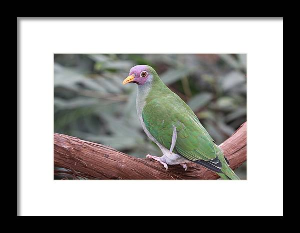 Bird Framed Print featuring the photograph Forest Top by Paul Slebodnick