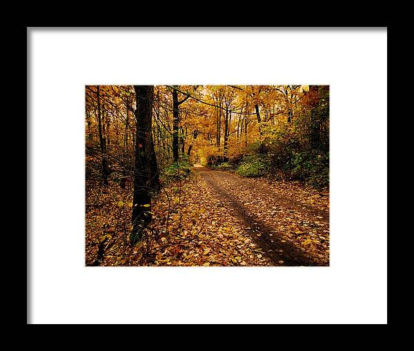 Forest Framed Print featuring the photograph Forest Trail by Scott Hovind