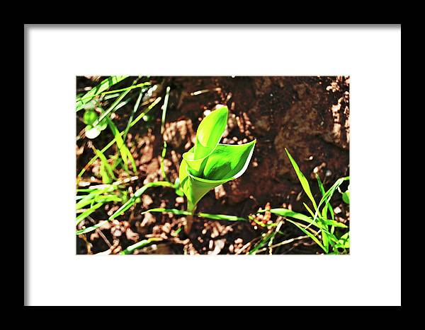 Forest Framed Print featuring the photograph Forest Wildlife Nature by HazelPhoto