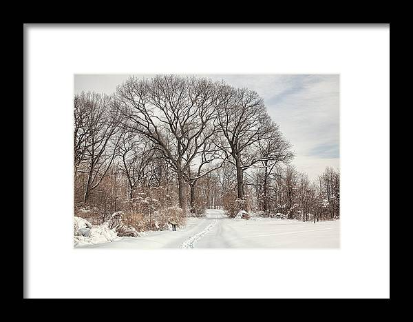 Snow Framed Print featuring the photograph Forever Wild by June Marie Sobrito