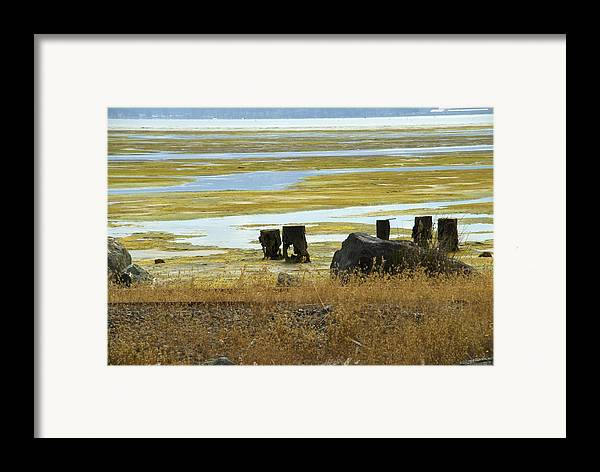 Swamp Framed Print featuring the photograph Forgotten Pier by Jessica Wakefield