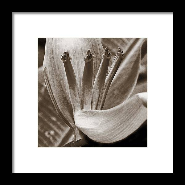 Natural Framed Print featuring the photograph Form Color Texture Pattern Plants 2 by Charlie Osborn