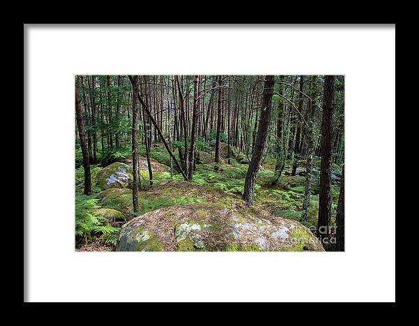 France Framed Print featuring the photograph Fountainbleau Forest by Bernd Billmayer
