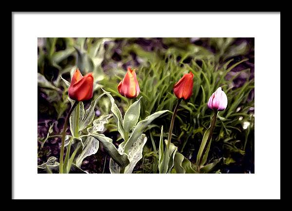 Tulips Framed Print featuring the painting Four Sisters by Ingrid Small