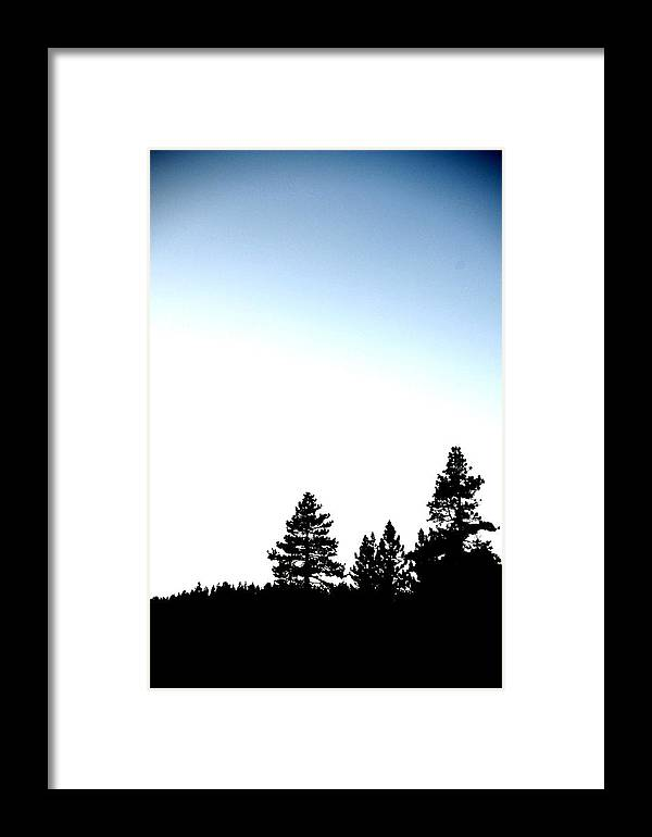 Lake Tahoe Framed Print featuring the photograph Four Tahoe Pines by Davida Parker