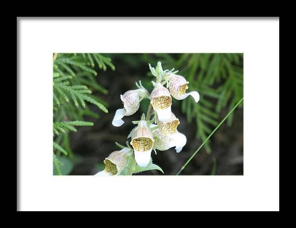 Wild Flowers Framed Print featuring the photograph Fox Glove by Alan Rutherford