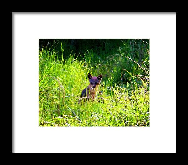 Fox Framed Print featuring the photograph Fox Pup by Timothy Bulone
