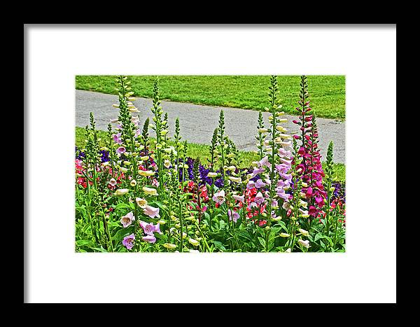 Foxglove In Front Of Conservatory In Golden Gate Park In San Francisco Framed Print featuring the photograph Foxglove In Front Of Conservatory In Golden Gate Park In San Francisco, California by Ruth Hager
