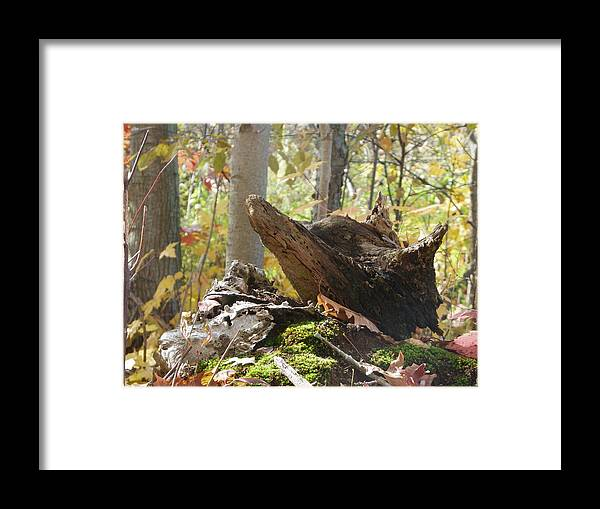 Nature Framed Print featuring the photograph Foxy Stump by Peggy King