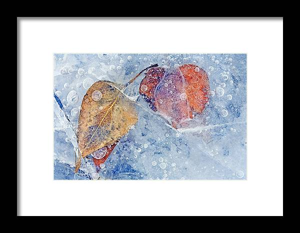Ice Framed Print featuring the photograph Fractured Seasons by Mike Dawson